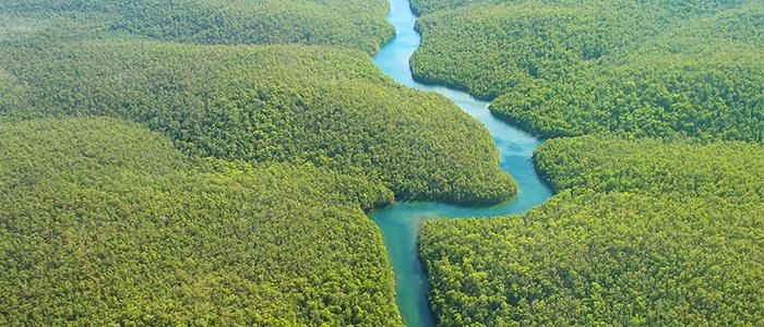 Amazon River Rainforest