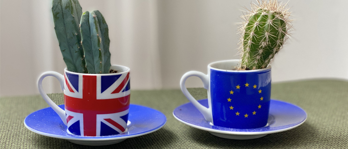 cacti in UK and EU mugs respectively
